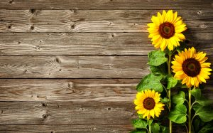 Sunflowers On Wooden Board